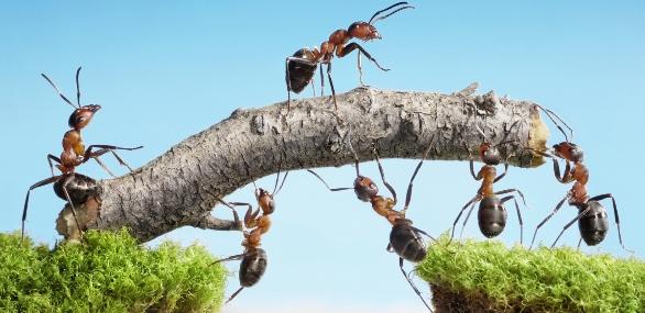 cohésion d'équipe collaboration efficace